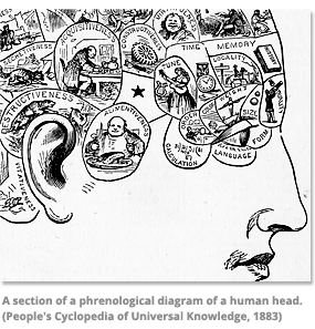 A section of a phrenological diagram