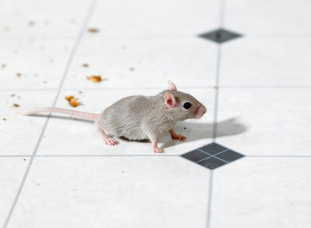 Mouse on the floor