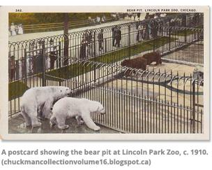 A postcard showing the bear at Lincoln Park Zoo