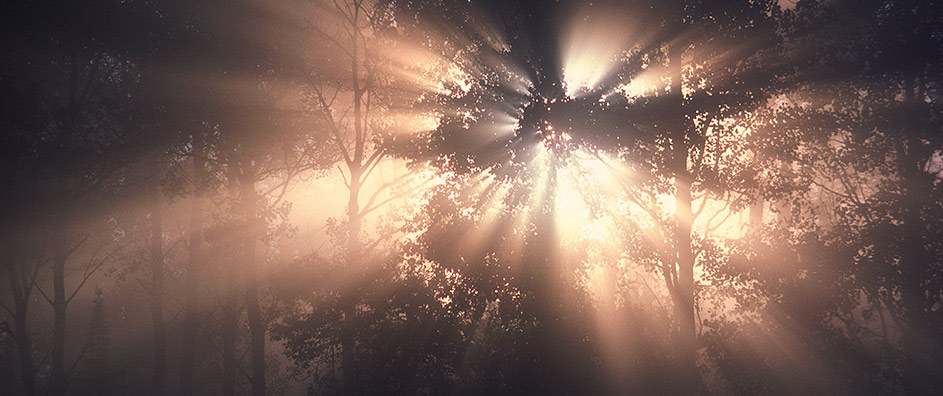 Light shrouded in forest