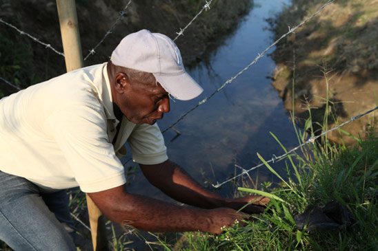 Don Hernan Zapata plants new trees along a fence surrounding the site for the House of Worship