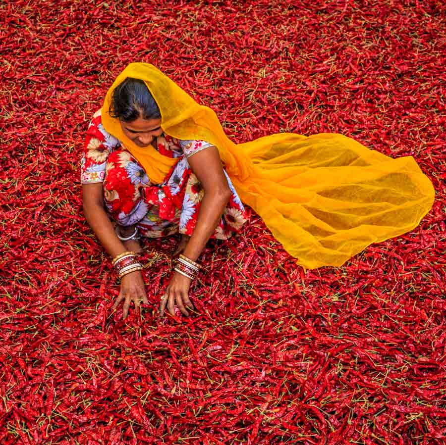 indian-woman-sorting-pepper