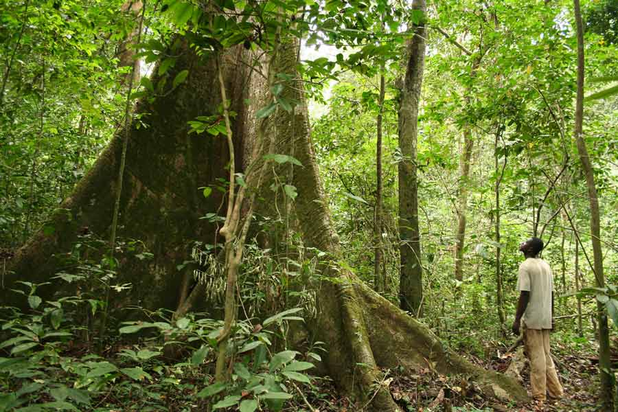 A rainforest in Gabon, the host country of the African Ministerial Conference on the Environment, which took place from 10–11 June 2017 in Libreville, the capital city (photo published on the UNEP website , copyright Alex Rouvin)