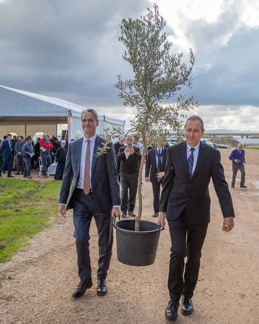 Shimon Lankri, Mayor of Akka, and David Rutstein, Secretary-General of the Baha'i International Community, carry an olive tree during a ceremony coinciding with the start of the construction of the Shrine of Abdu'l-Baha.